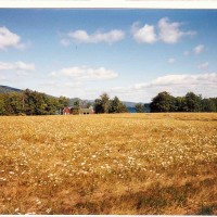 Bluff Head Meadow
