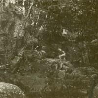 Woods, photo circa 1898-99